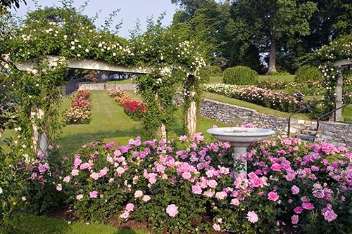 Hershey Gardens Italian Rose garden